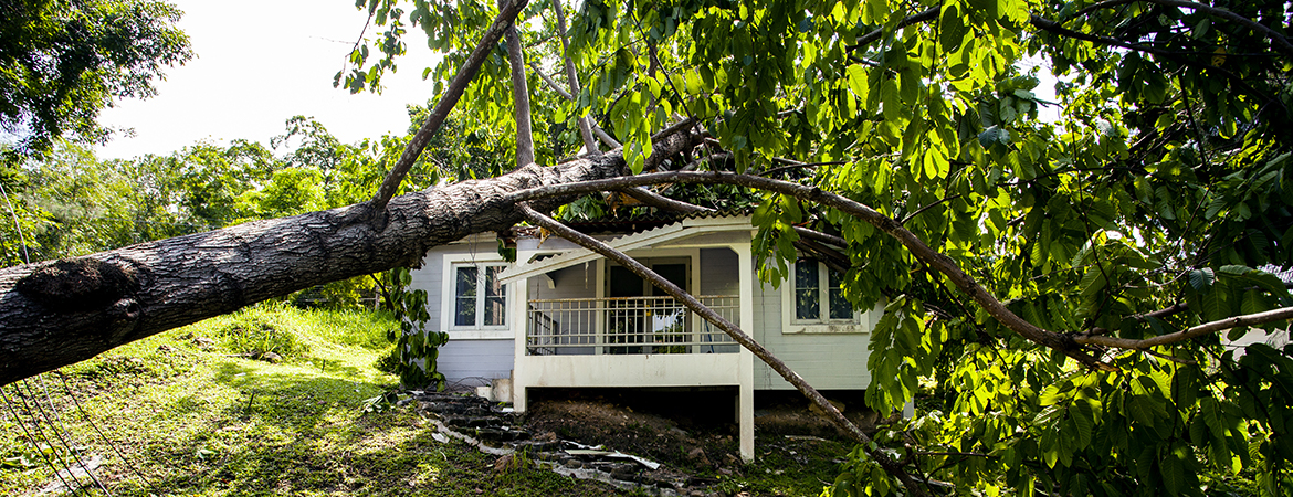 Kentucky Farm Bureau Insurance fallen tree blog