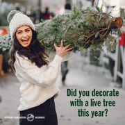 How to recycle your Christmas tree 3.jpg