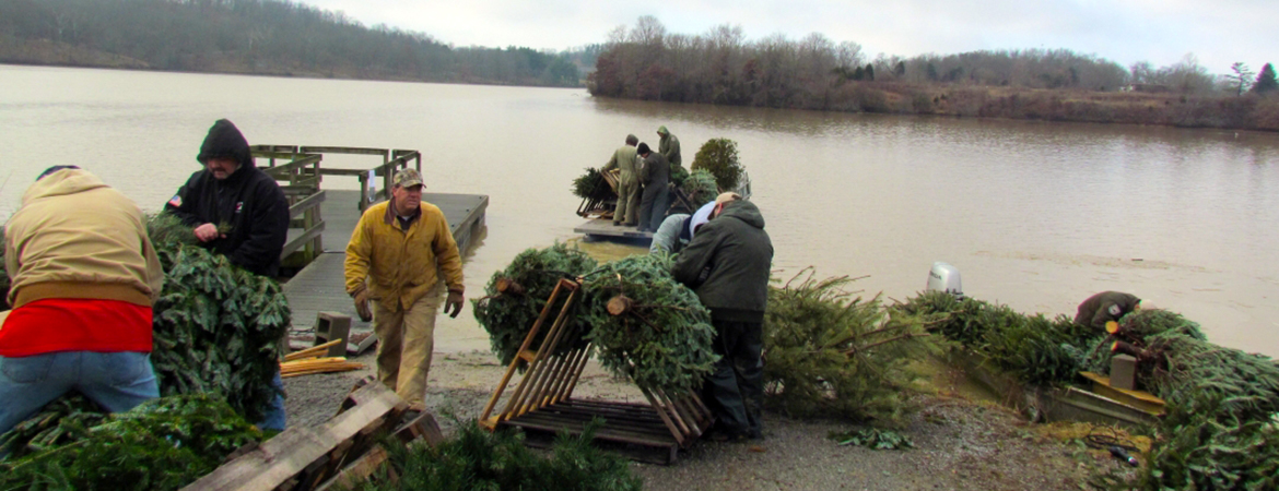 Do you have a live Christmas tree? Here's one way you can recycle it