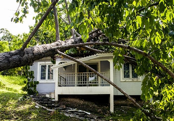 Fallen trees: What's covered (and what's not) on your insurance policy