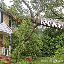 fallen tree insurance FAQ
