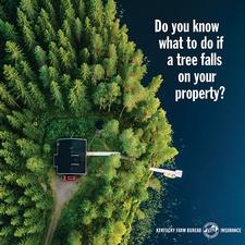 fallen tree insurance FAQ 1