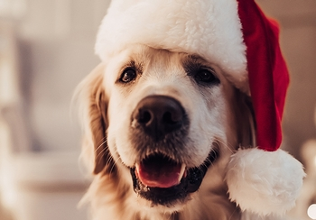 How to pet-proof your holiday décor