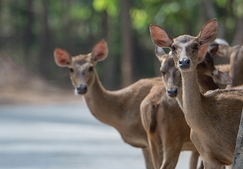 9 tips for avoiding a deer collision this fall