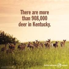 KFB Insurance blog: Tips for avoiding a deer collision