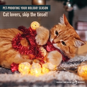 how to pet proof your holiday decor 3.jpg