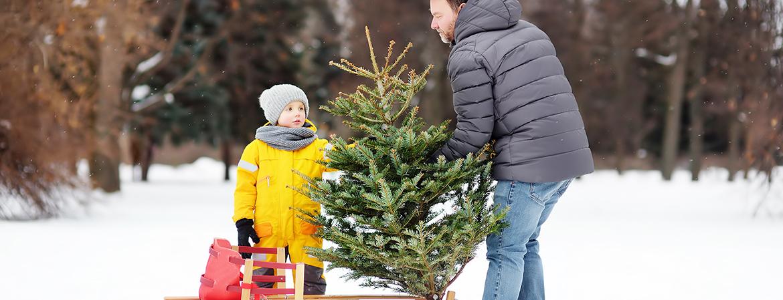 Christmas tree safety tips - Kentucky Farm Bureau