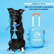 Pet preparation 1