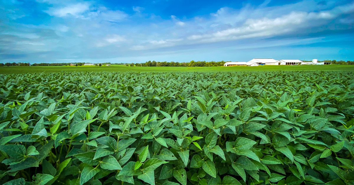 Record Corn and Soybean Yields Highlight 2020 Growing Season